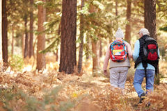 Senior couple hiking in a forest, back view, California, USA Royalty Free Stock Photo