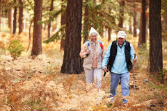 Senior couple hold hands hiking in a forest, California, USA Stock Image