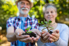 Senior couple holding crop in his hands Stock Photography