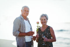 Senior couple holding rose and red wine glasses Royalty Free Stock Images