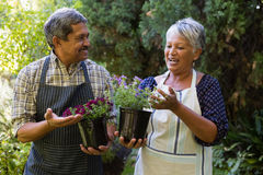 Senior couple interacting with each other in garden. Happy senior couple interacting with each other in garden Royalty Free Stock Photography
