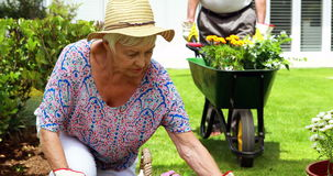 Senior couple interacting with each other while gardening. In garden stock video footage