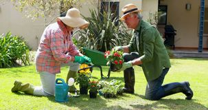 Senior couple interacting with each other while gardening 4k. Senior couple interacting with each other while gardening on a sunny day 4k stock video