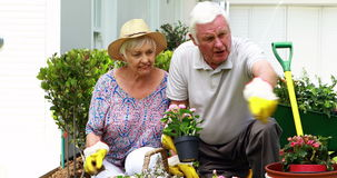 Senior couple interacting with each other while gardening. In garden stock footage