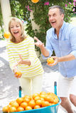 Senior Couple Juggling Oranges. In Front Of Wheelbarrow Smiling stock images