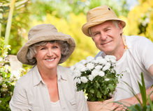 Senior couple looking at the camera Royalty Free Stock Image