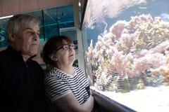 Senior couple at oceanarium Stock Images