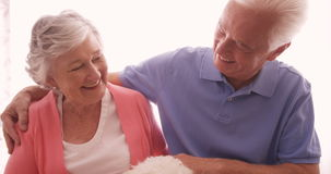 Senior couple petting a dog stock video footage