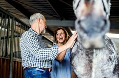 A senior couple petting a horse in a stable. Stock Photography
