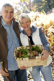 Senior couple picking with basket of ceps Royalty Free Stock Images