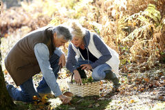 Senior couple picking up mushrooms Stock Photo