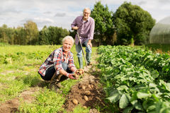 Senior couple planting potatoes at garden or farm Royalty Free Stock Images