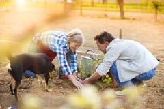 Senior couple planting seedlings Royalty Free Stock Photo
