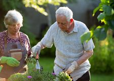 Senior couple potting plants royalty free stock images