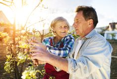 Senior couple pruning apple tree Stock Image