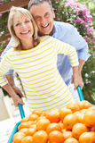 Senior Couple Pushing Wheelbarrow Royalty Free Stock Image