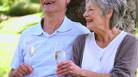 Senior couple relaxing in the park together having champagne. On a sunny day stock footage