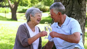 Senior couple relaxing in the park together having champagne. On a sunny day stock video footage