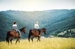 A senior couple riding horses in nature. royalty free stock photo