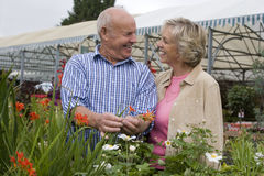 Senior couple shopping in garden centre, man holding red flower, smiling, face to face Royalty Free Stock Photos