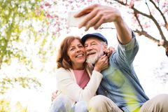 Senior couple with smartphone outside in spring nature. Beautiful senior couple in love on a walk outside in spring nature under blossoming trees. Man and women stock photo