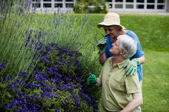 Senior couple smelling lavender Royalty Free Stock Images