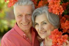 Senior couple smiling Royalty Free Stock Photo