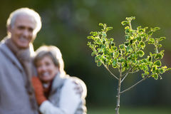 Senior couple standing in autumn garden, smiling, portrait, focus on small tree in foreground Stock Image