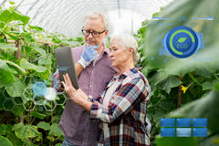 Senior couple with tablet pc at farm greenhouse Royalty Free Stock Photos