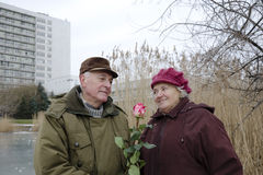 The senior couple on Valentines day Royalty Free Stock Photos