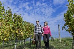 Senior couple in the vineyard Stock Images