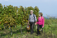 Senior couple in the vineyard Royalty Free Stock Images