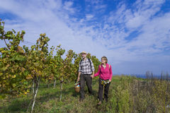 Senior couple in the vineyard Stock Image