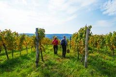 Senior couple in the vineyard Stock Photos