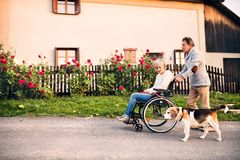 Senior couple with wheelchair on a walk with dog. Senior couple on a walk with a dog. Senior men pushing a women in a wheelchair on the village road Stock Photos