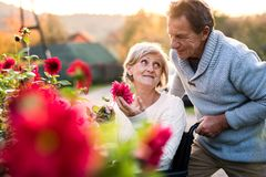 Senior couple with wheelchair on a walk. Stock Images