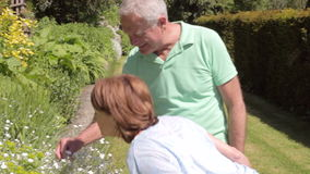 Senior Couple Walking Around Garden Together. Senior couple walk around garden as female stops to small flower.Shot on Canon 5d Mk2 with a frame rate of 30fps stock footage