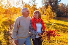 Senior couple walking in autumn forest. Middle-aged man and woman hugging and chilling outdoors. Senior couple walking in autumn forest. Middle-aged men and stock images