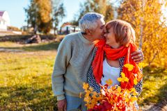 Senior couple walking in autumn forest. Middle-aged man and woman hugging and chilling outdoors. Senior couple walking in autumn forest. Middle-aged men and royalty free stock images