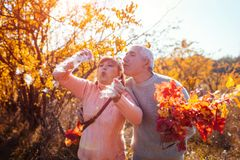 Senior couple walking in autumn forest. Middle-aged man and woman blowing fluffy seeds. People having fun. Senior couple walking in autumn forest. Middle-aged royalty free stock images