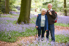 Senior Couple Walking Through Bluebell Wood Stock Photography