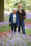 Senior Couple Walking Through Bluebell Wood Royalty Free Stock Photo