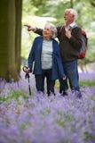 Senior Couple Walking Through Bluebell Wood Royalty Free Stock Photos