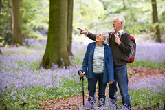 Senior Couple Walking Through Bluebell Wood Royalty Free Stock Photography