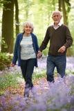 Senior Couple Walking Through Bluebell Wood Royalty Free Stock Image