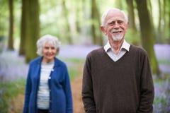 Senior Couple Walking Through Bluebells Woods Stock Image