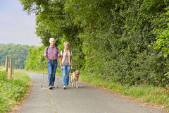 Senior couple walking the dog. In the nature in the summer Royalty Free Stock Images