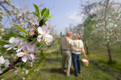 Senior couple walking in meadow, focus on foreground Stock Images