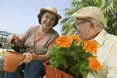 Senior Couple Working In Garden Royalty Free Stock Photo