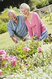 Senior couple working in garden Stock Photos